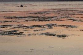 Bostanlı sahilinde yosun tehlikesi