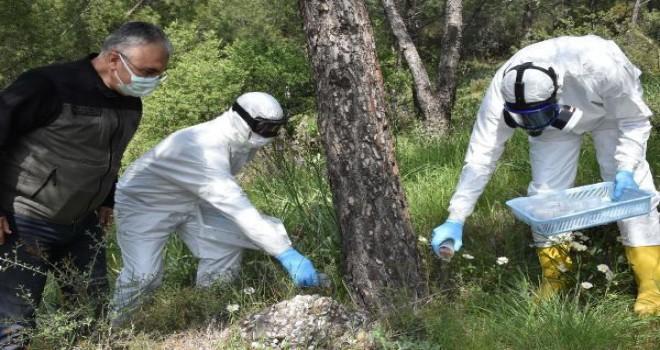 Laboratuvarda üretilen böcekler Karşıyaka'da doğaya salındı