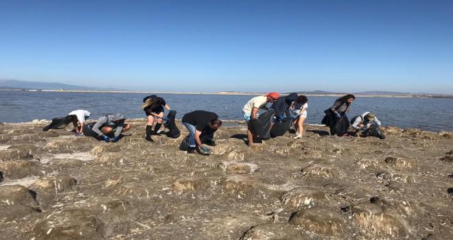 Kuş Cenneti Flamingolar için temizlendi