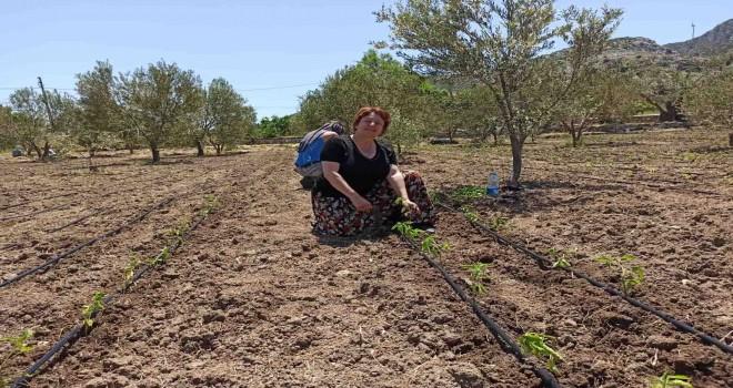 Karaburun'da 19 bin sebze fidesi toprakla buluştu