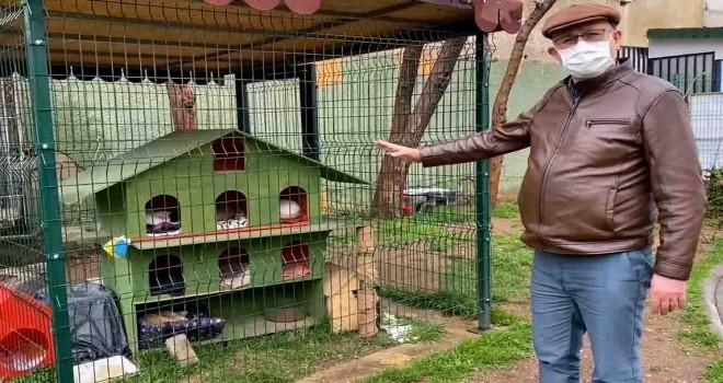 CHP'li Sertel'den hayvan hakları yasa tasarısıyla ilgili çağrı
