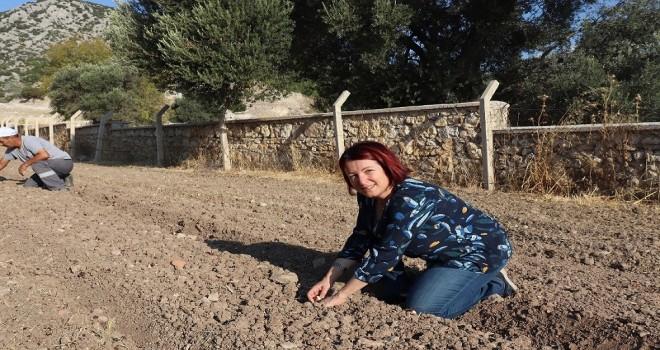 Karaburun'da yerli tohum ve doğru tarım dönemi