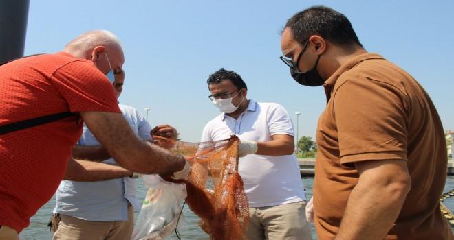 Bostanlı sahiline ölü balıklar vurdu...