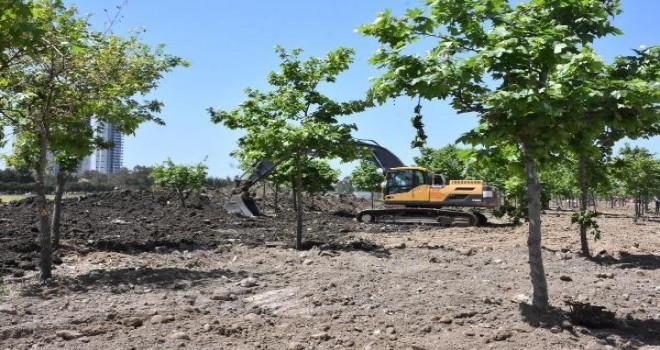Mavişehir'de çınar ağaçlarının sökülmesine tepki