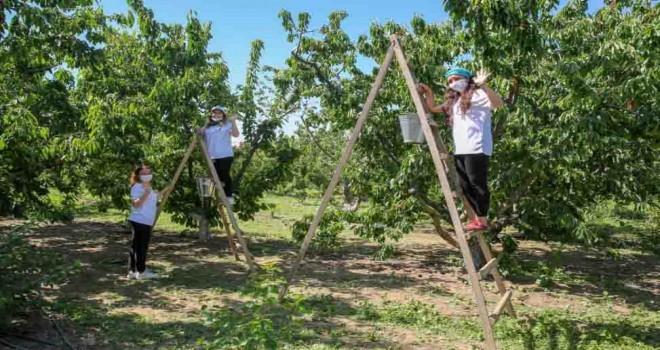 İzmir'de kiraz hasadı için dayanışma başladı