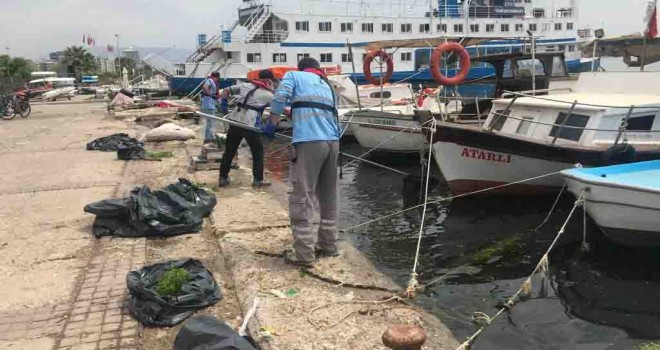 Karşıyaka kıyılarındaki deniz marulları temizleniyor