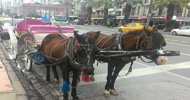 Karşıyaka'daki fayton ve atlar satın alınacak