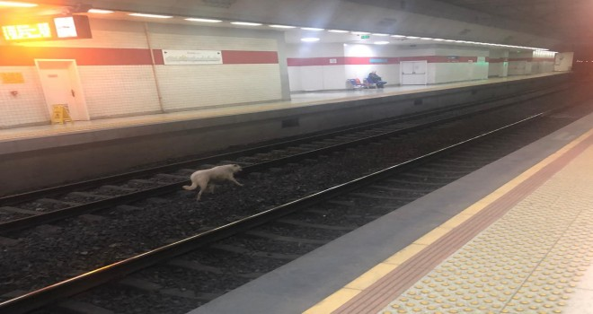 İZBAN treni köpeği bekledi...