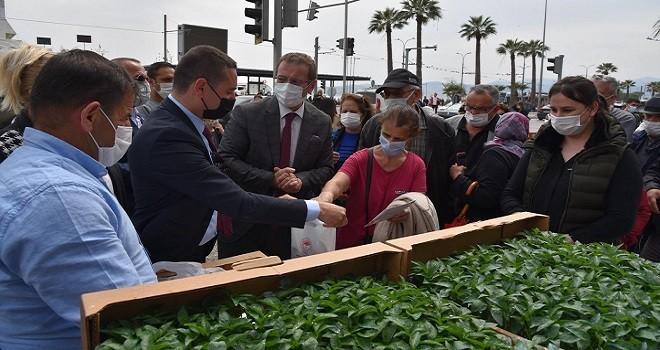 Karşıyaka'da 4 bin adet domates fidesi dağıtılacak