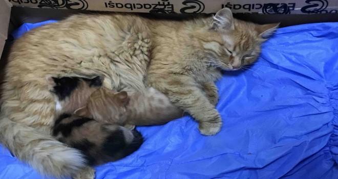 Anne kedi yavrularını doktora getirdi
