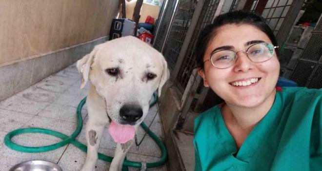 Umut kesilen köpek hayata döndürüldü