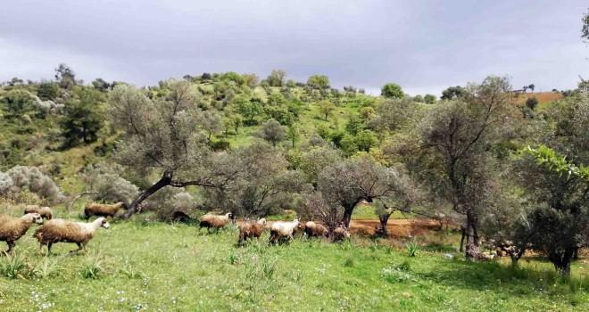 İzmir Büyükşehir orman seferberliği başlatıyor