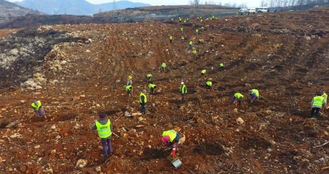 İzmir'de 296 hektar orman alanı yandı 1926 hektar ağaçlandırıldı