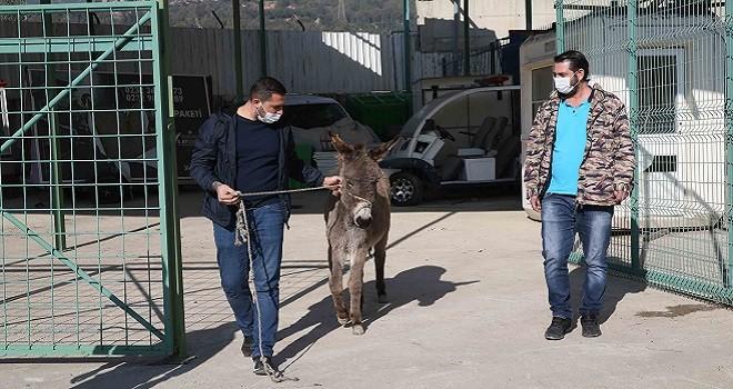 Karşıyaka'da başıboş eşek koruma altına alındı