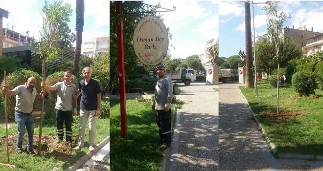Osmanbey Parkı'na akasyalar dikildi...