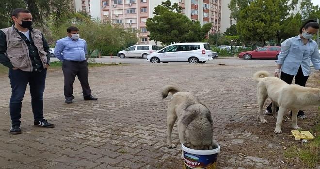 Tarım ve Orman Müdürlüğü sokak hayvanlarını unutmadı