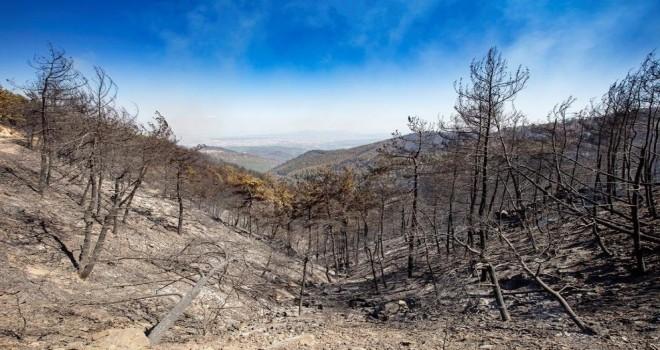Büyükşehir'e yangınlarla ilgili bağış toplama izni verildi