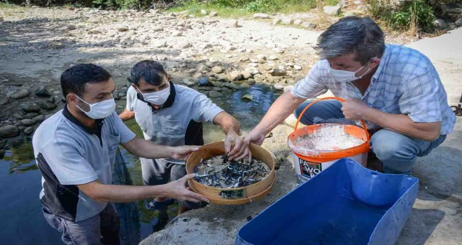 Su birikintisinde mahsur kalan balık yavruları kurtarıldı