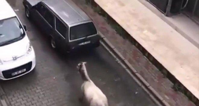 Arabasının arkasına at bağlayan kişiye para cezası verildi