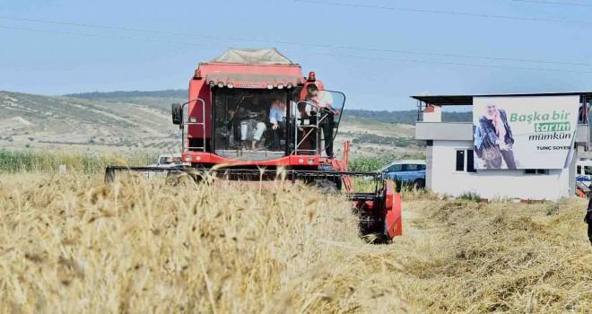 Başkan Soyer karakılçık buğdayının hasadını yaptı