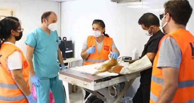 Bayraklı'da hayvanseverlere arama kurtarma eğitimi