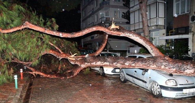 Çam ağacı otomobilin üzerine devrildi...