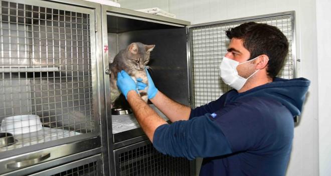Narlıdere Belediyesi'nden 3 bin 782 sokak hayvanına sağlık hizmeti