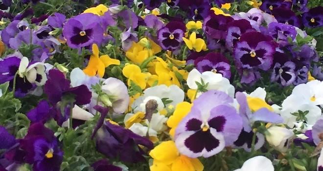 19. Karşıyaka Çiçek Pazarı,  Mayıs sonunda açılacak