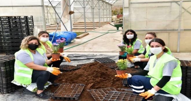 Çiğli Belediyesi çiçek üretimine başladı