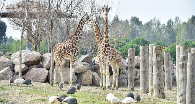 Doğal Yaşam Parkı 8.4 milyon ziyaretçiyi ağırladı