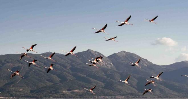 Gediz Deltası'nda Kuş Göçü İzleme Programı başladı