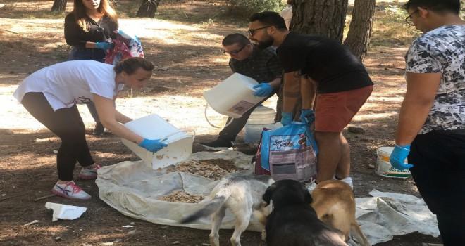 CHP Karşıyaka Gençlik Örgütü sahipsiz canları besledi