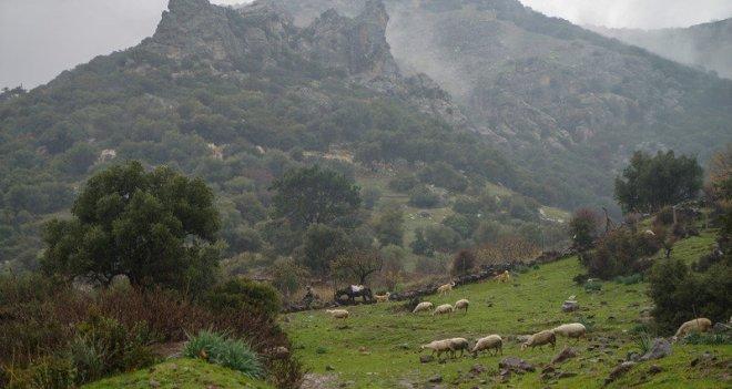 İzmir Barosu: Yamanlar, suyu lezzetli çöpsüz bir dağ olarak kalmalıdır