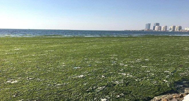 Karşıyaka'da deniz yosunla kaplandı…