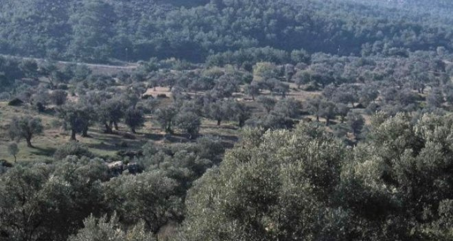 Karşıyaka'da Kentsel Dönüşüm Ormanı kuruluyor
