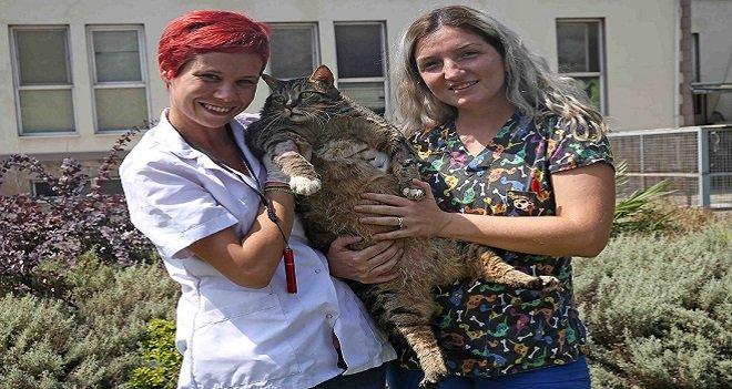 Karşıyaka'nın Obez kedisi diyette