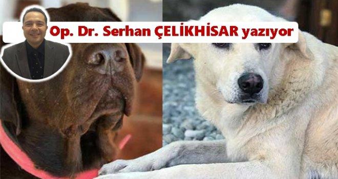 Köpek öldürme=Mala zarar verme!