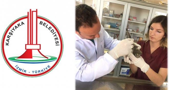 Yaralı baykuşa, Karşıyaka Belediyesi koruması